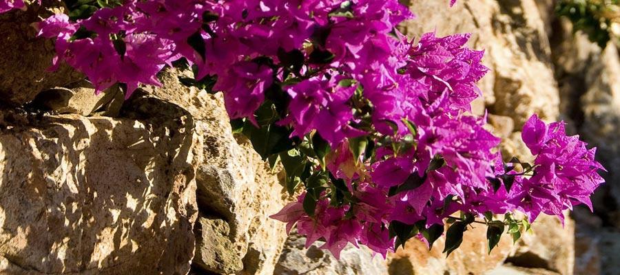 mur-fleur