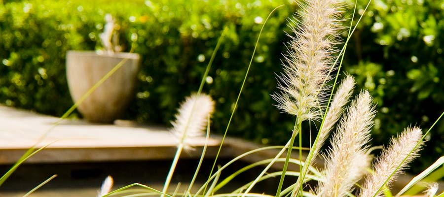 piscine-herb